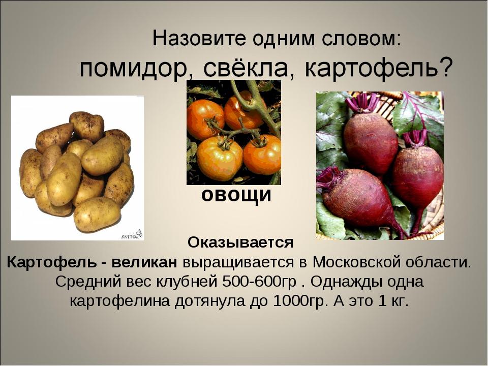 Оказывается Картофель - великан выращивается в Московской области. Средний в...
