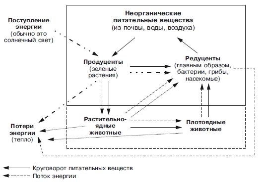Реферат основные экосистемы земли и их особенности 7426