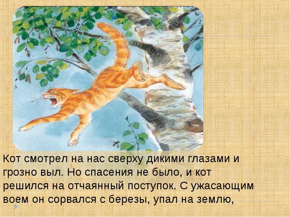 Кот смотрел на нас сверху дикими глазами и грозно выл. Но спасения не было, и...