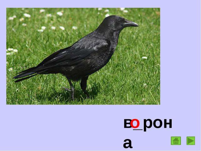 в_рона о