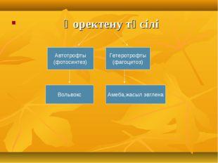 Қоректену тәсілі Автотрофты (фотосинтез) Гетеротрофты (фагоцитоз) Вольвокс А