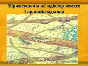 Біржасушалы жәндіктер немесе қарапайымдылар
