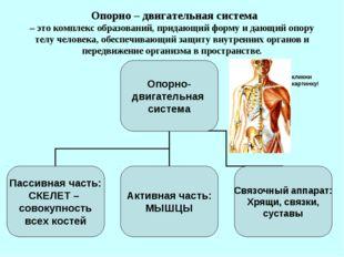 Опорно – двигательная система – это комплекс образований, придающий форму и