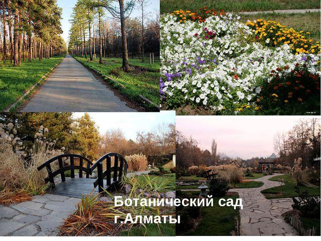 Ботанический сад г.Алматы