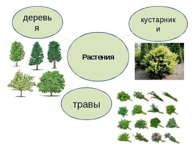 Растения деревья травы кустарники