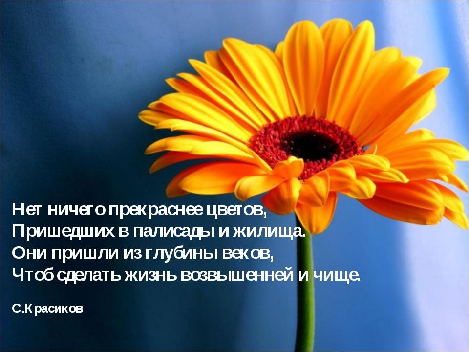 Нет ничего прекраснее цветов, Пришедших в палисады и жилища. Они пришли из...
