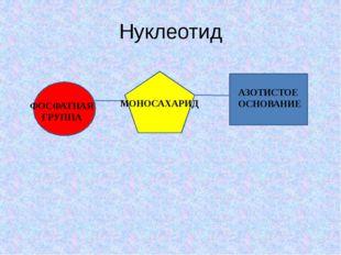 Нуклеотид ФОСФАТНАЯ ГРУППА МОНОСАХАРИД АЗОТИСТОЕ ОСНОВАНИЕ