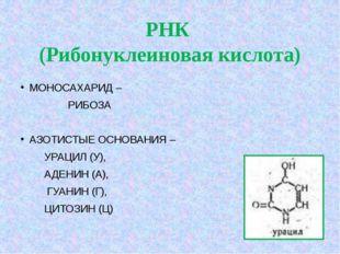 РНК (Рибонуклеиновая кислота) МОНОСАХАРИД – РИБОЗА АЗОТИСТЫЕ ОСНОВАНИЯ –