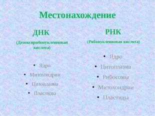 Местонахождение ДНК (Дезоксирибонуклеиновая кислота) Ядро Митохондрии Цитопла