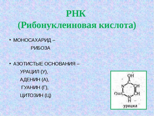 РНК (Рибонуклеиновая кислота) МОНОСАХАРИД – РИБОЗА АЗОТИСТЫЕ ОСНОВАНИЯ –...