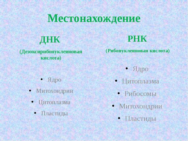 Местонахождение ДНК (Дезоксирибонуклеиновая кислота) Ядро Митохондрии Цитопла...