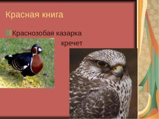 Красная книга Краснозобая казарка кречет
