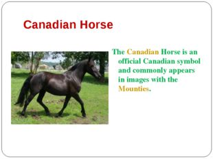 Canadian Horse The Canadian Horse is an official Canadian symbol and commonly
