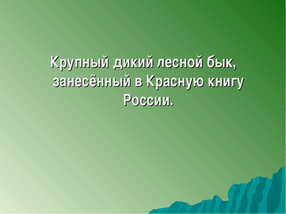 Крупный дикий лесной бык, занесённый в Красную книгу России.