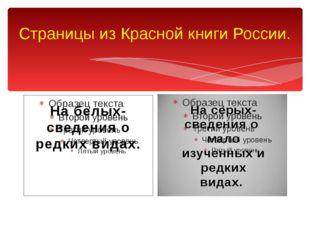 Страницы из Красной книги России. На белых- сведения о редких видах. На серых