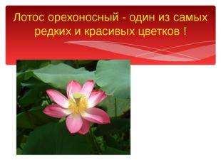 Лотос орехоносный - один из самых редких и красивых цветков !