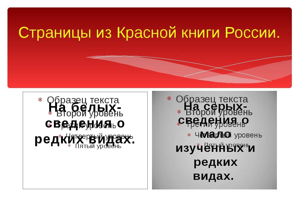 Страницы из Красной книги России. На белых- сведения о редких видах. На серых...