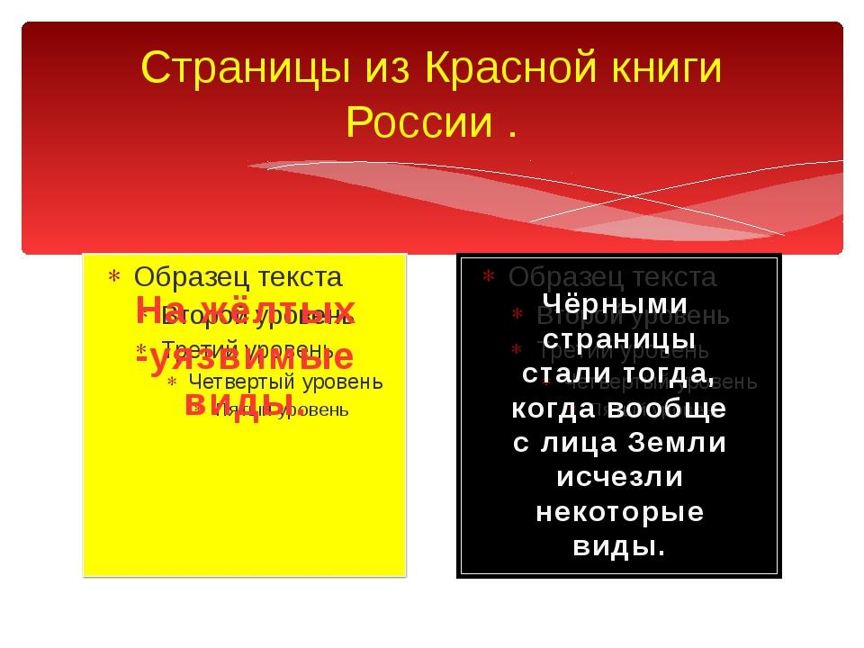Страницы из Красной книги России . На жёлтых -уязвимые виды. Чёрными страницы...