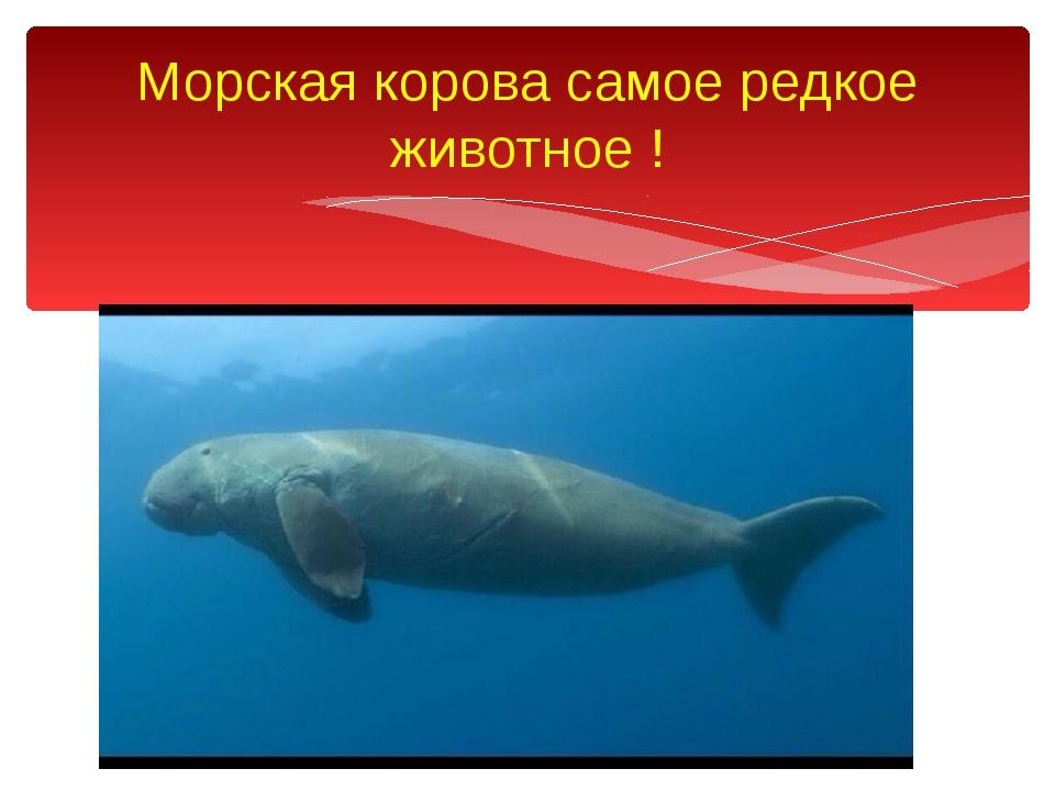 Морская корова самое редкое животное !