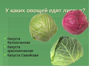 У каких овощей едят листья? Капуста белокочанная Капуста краснокочанная Капус
