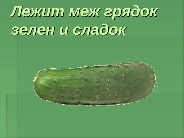 Лежит меж грядок зелен и сладок