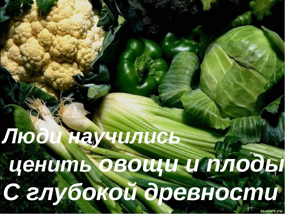 Люди научились ценить овощи и плоды С глубокой древности