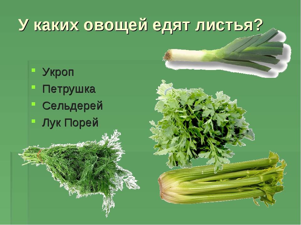 У каких овощей едят листья? Укроп Петрушка Сельдерей Лук Порей