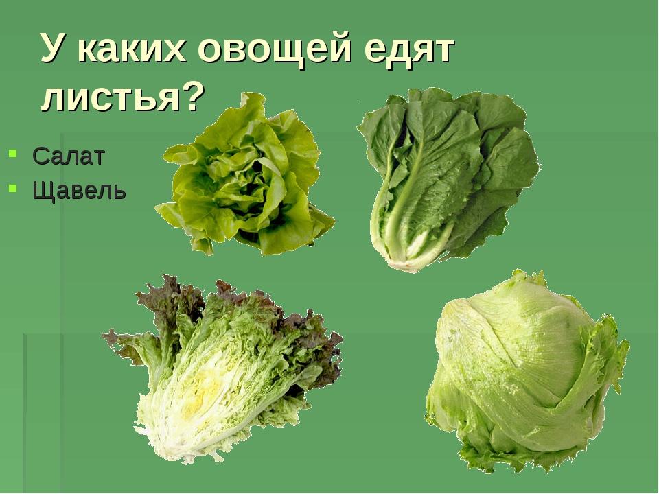 У каких овощей едят листья? Салат Щавель