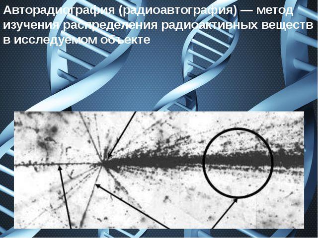 Авторадиография(радиоавтография)— метод изучения распределения радиоактивны...
