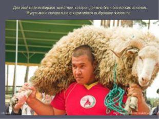 Для этой цели выбирают животное, которое должно быть без всяких изъянов. Мус