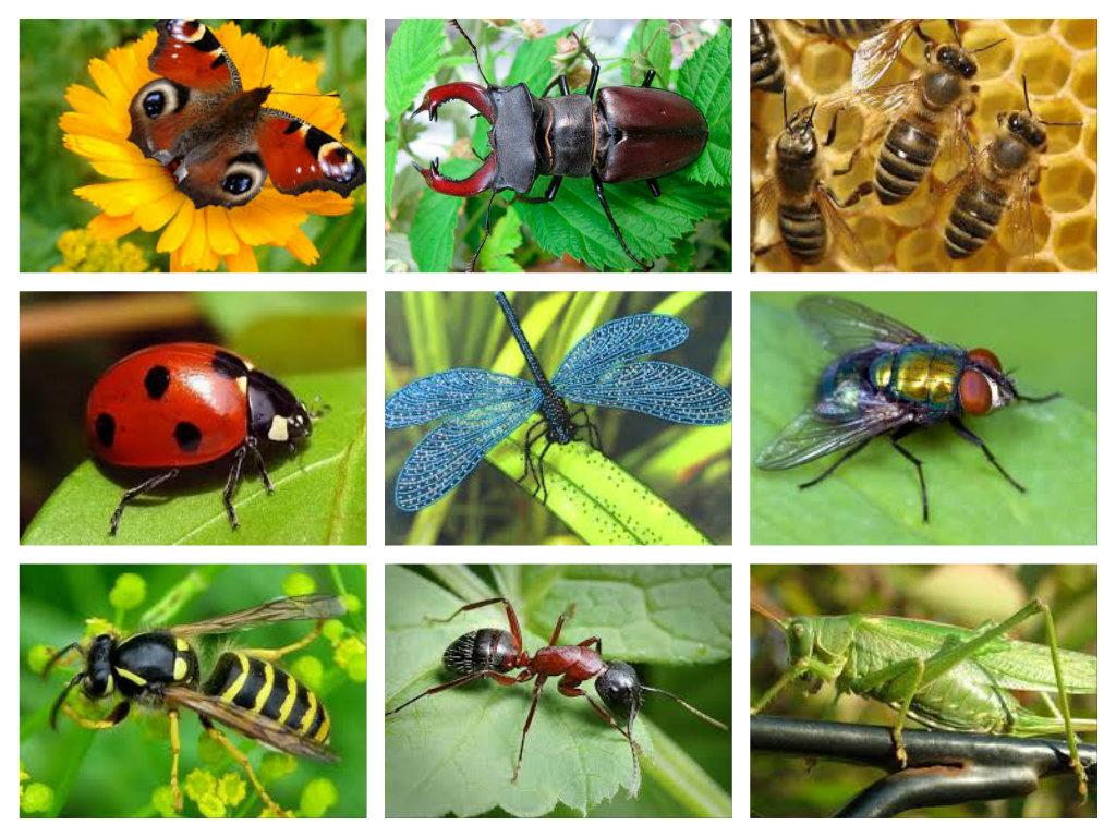 C:\Users\Olga\Desktop\СБОРНОЕ ДЕКАБРЬ 14\АНИМАШКИ. БЛОГ. САЙТ\ПРИРОДА\насекомые\pizap.com14277402307771 (2).jpg