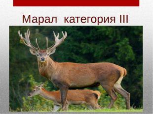 Марал категория III