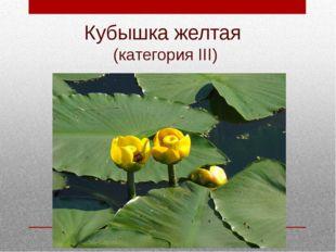 Кубышка желтая (категория III)