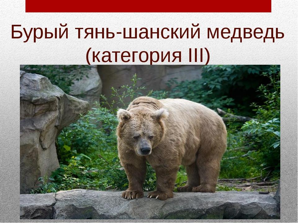 Бурый тянь-шанский медведь (категория III)