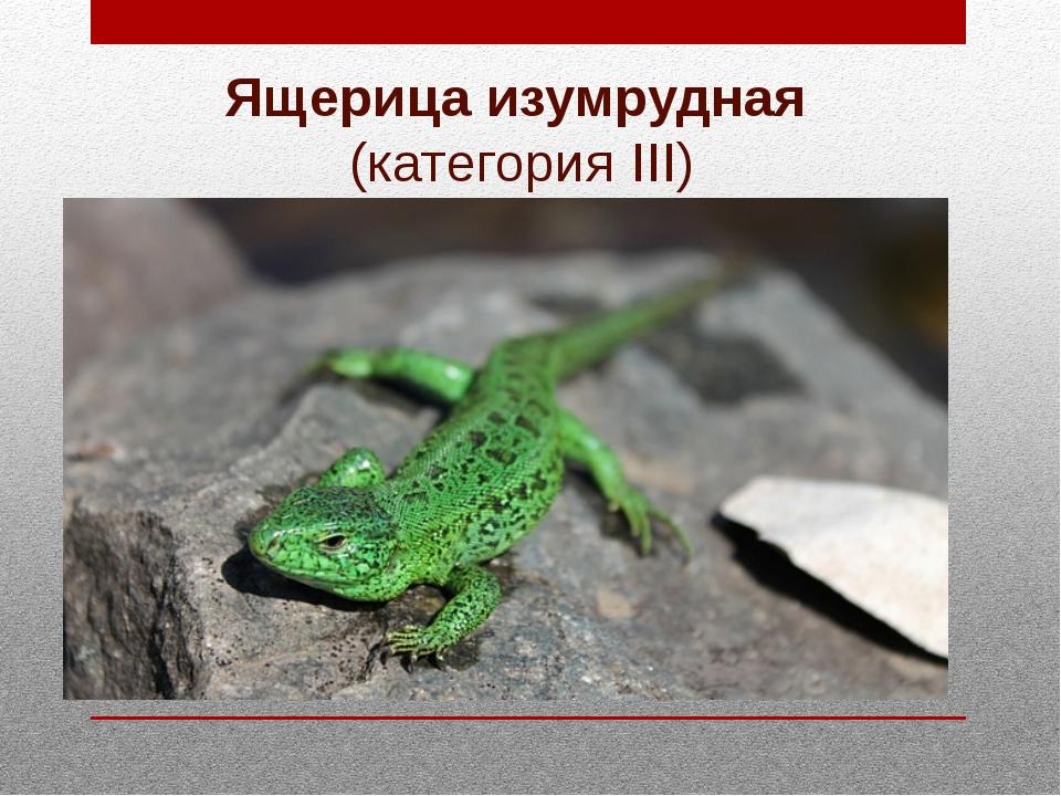 Ящерица изумрудная (категория III)