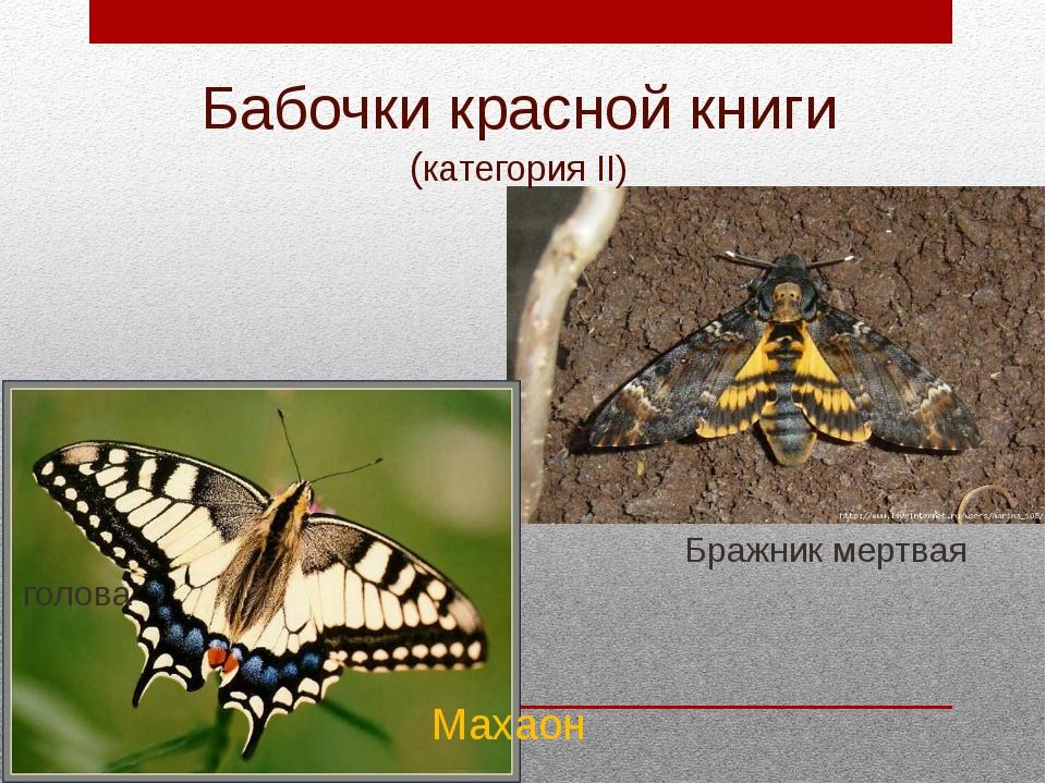 Бабочки красной книги (категория II) Бражник мертвая голова Махаон
