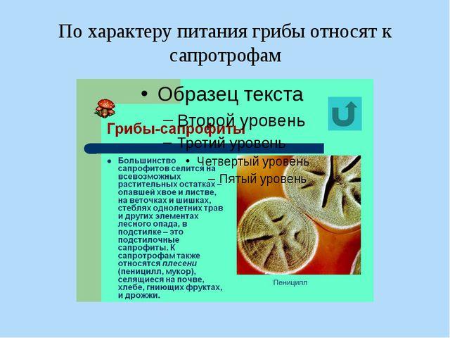 По характеру питания грибы относят к сапротрофам