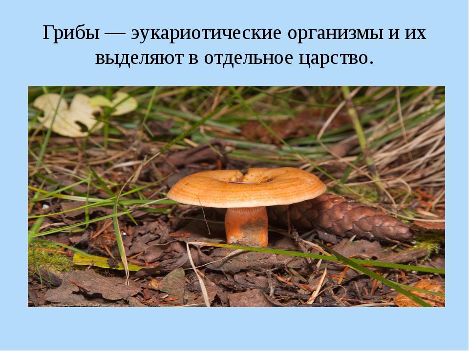 Грибы — эукариотические организмы и их выделяют в отдельное царство.