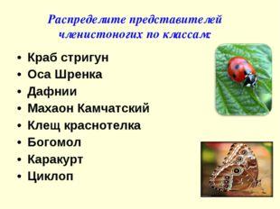 Краб стригун Оса Шренка Дафнии Махаон Камчатский Клещ краснотелка Богомол Кар