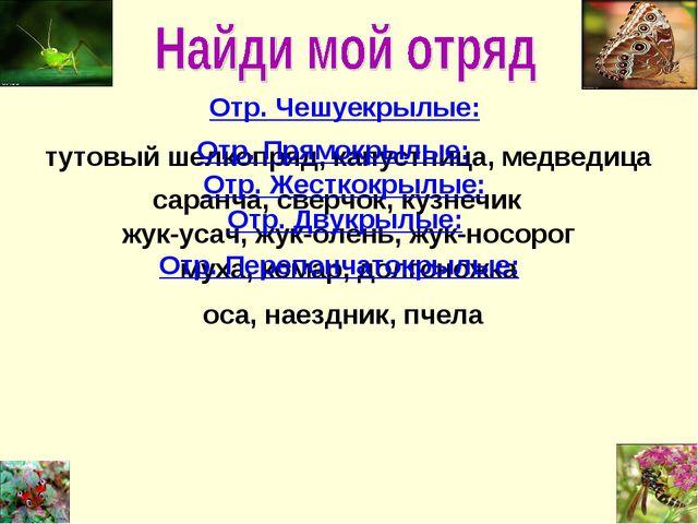 Отр. Чешуекрылые: тутовый шелкопряд, капустница, медведица Отр. Прямокрылые:...