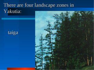 There are four landscape zones in Yakutia: taiga