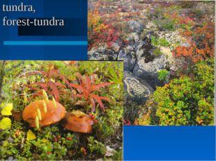 tundra, forest-tundra