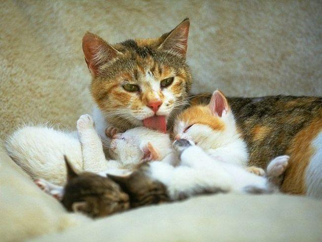 Ответы@Mail.Ru: Простите, простите меня сто раз....но...не долюбливаю Я кошек))))) А за что Вы их обожаете?