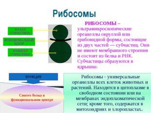 Рибосомы РИБОСОМЫ – ультрамикроскопические органеллы округлой или грибовидной