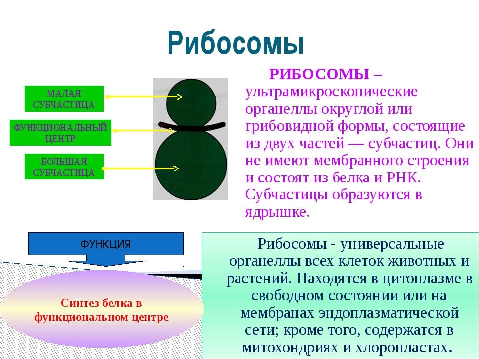 Рибосомы РИБОСОМЫ – ультрамикроскопические органеллы округлой или грибовидной...