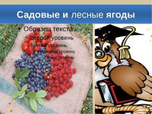 Садовые и лесные ягоды