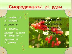 Смородина-хъӕлӕрдзы Йӕ сыфтӕ,йӕ нӕмгуытӕ Хӕрынӕн бӕззынц. Бакастӕй, раст фӕр