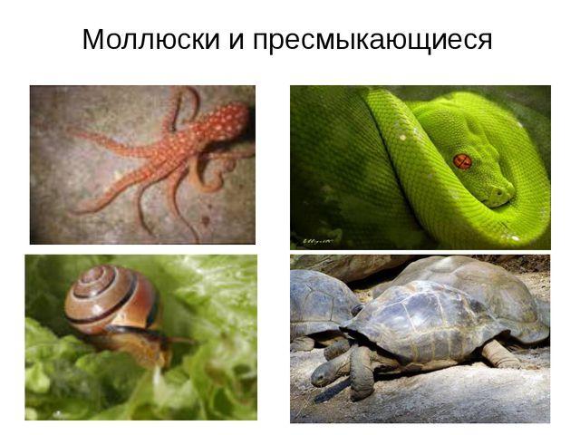 Моллюски и пресмыкающиеся