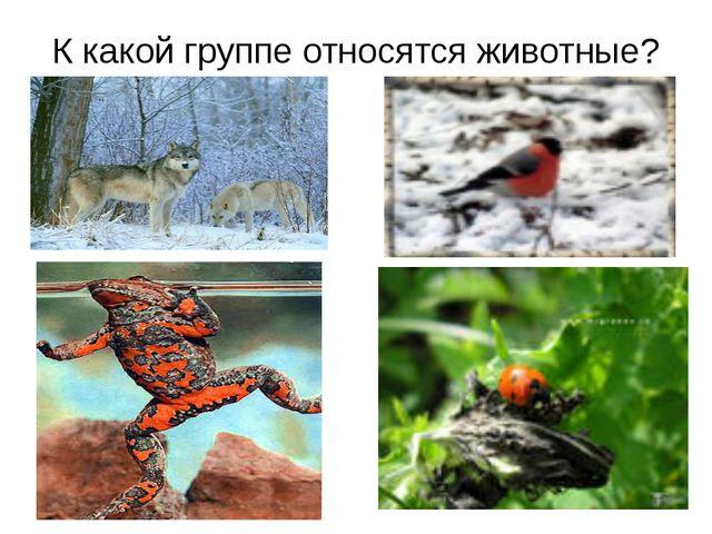 К какой группе относятся животные?