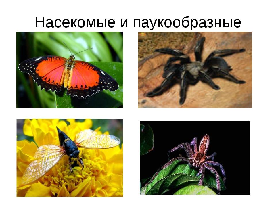 Насекомые и паукообразные